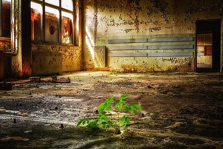 green plant inside room illustration