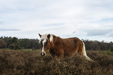 photo of brown horse on brown grass field