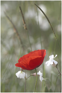 close up shot of red flower and white flowers