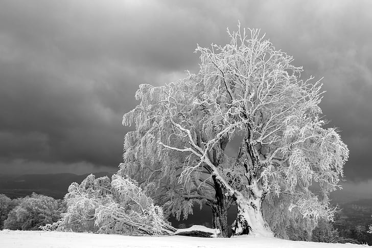 black tree covered by snow during daytime