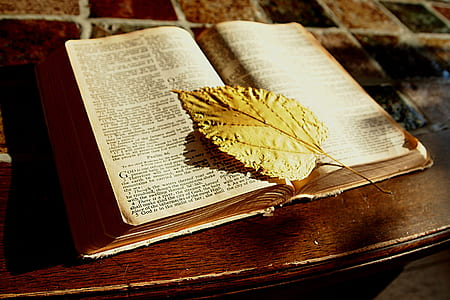 white printed book page with yellow leaf