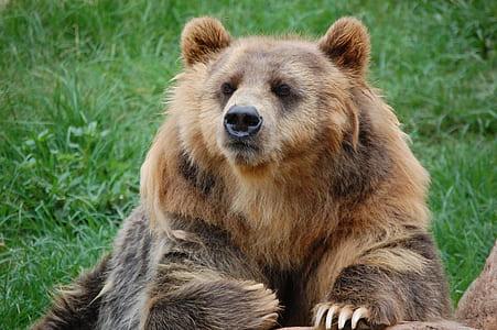 brown bear on green grass field