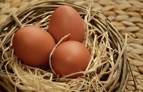 three brown eggs on nest