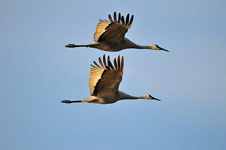 two brown bird spread its wings on sky