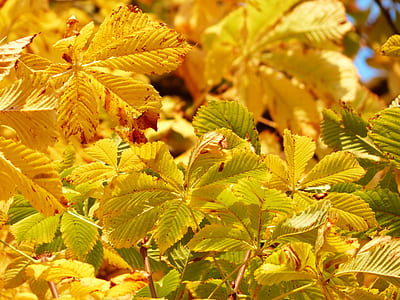 Green Leaf Macro Photography