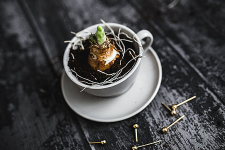 Little seedling in a cut with walnuts and golden pins