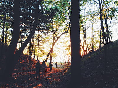 people walking on forest taken during sunset