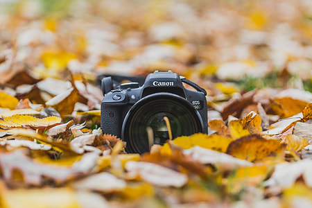 Camera in Autumn/Fall leaves