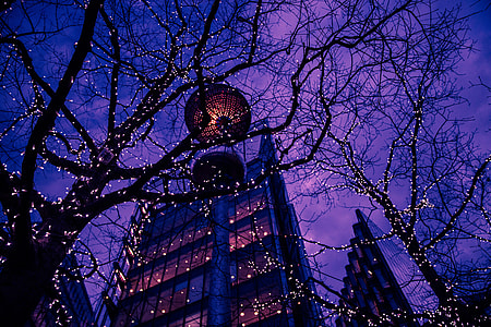 Trees, lights and buildings at night in Central London