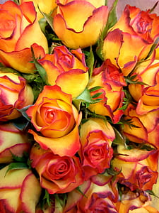 yellow-and-red rose flowers bouquet