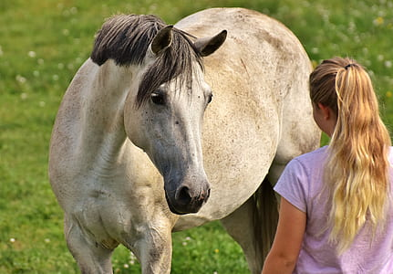 white and gray horse