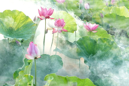 pink lotuses and green lily pads painting