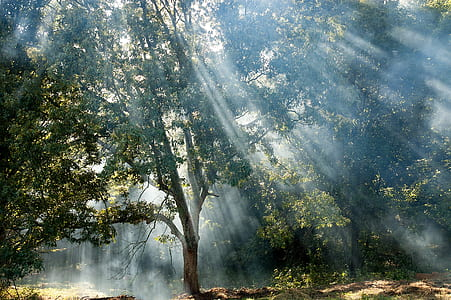 tall green leafed tree with sun rays