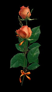 photography of orange rose