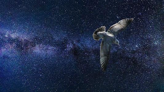 white bird in galaxy