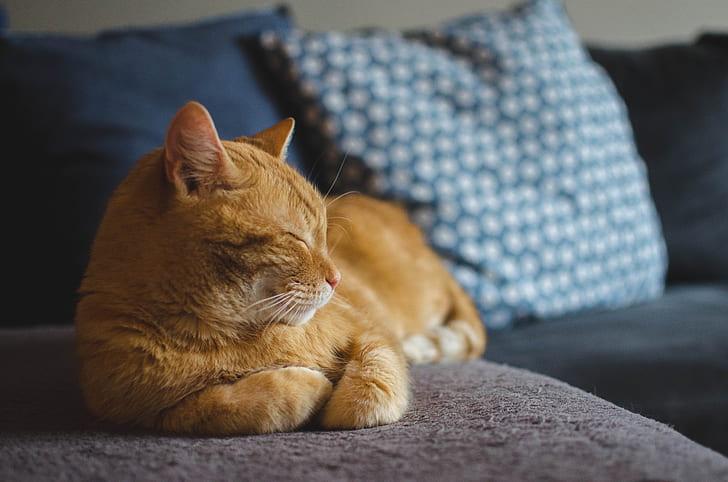 shadow depth of field photography of orange tabby cat reclining sofa