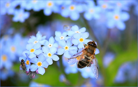 macro photography of two flies on flowers