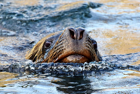 sea lion on body of water