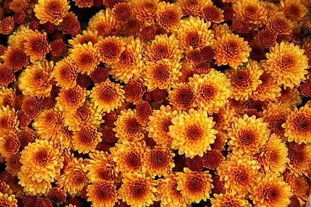 yellow-and-orange petaled flowers