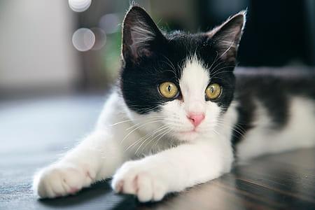 white and black cat lying on black floor