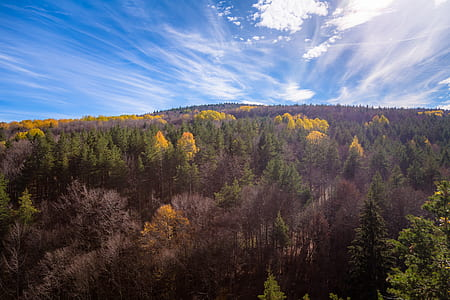 Aerial Shot Of Trees During Fall Season Under Blue Sky