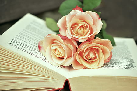 three beige roses on top of open book