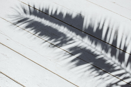 Palm leaf and shadow