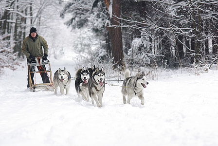 man wearing gray zip-up jacket standing towards four Siberian Husky with ground cape by snow