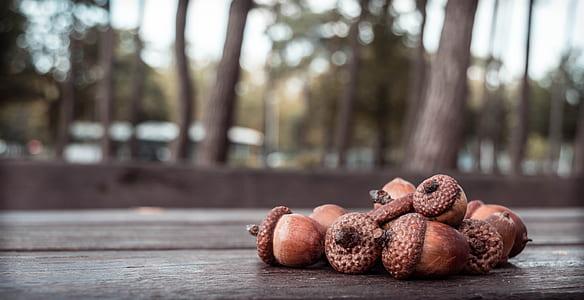 acorn photo on table