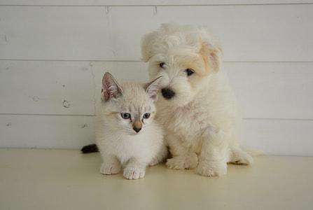 white kitten beside white puppy