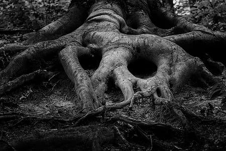 gray tree roots