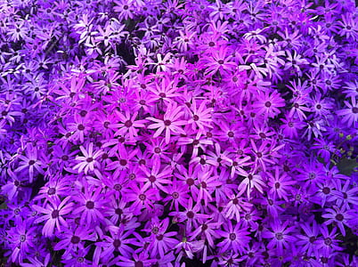 purple-and-white petaled flower lot