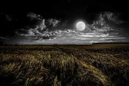 green grass under full moon