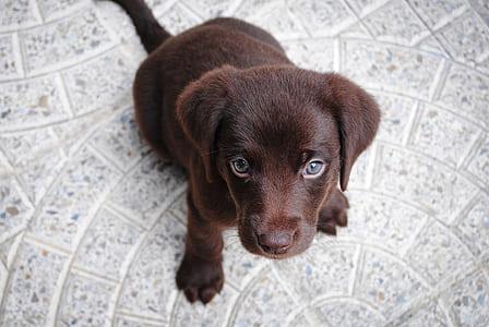 photo of short coat brown puppy