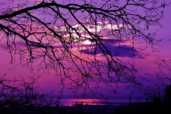 photography of leafless tree