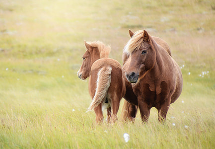 selective focus photography of brown horse