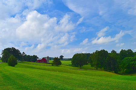 green trees on green field under white clouds