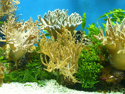 fish tank corals with white sand