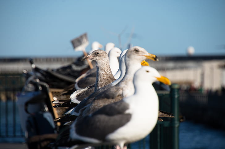 flock of gulls perched on gray metal post