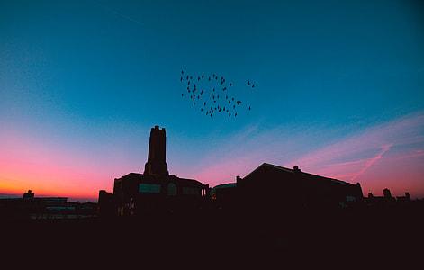 gray building under birds flying during sunrise