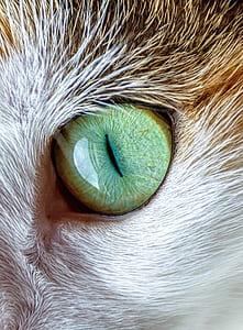 closeup photo of animal green eye