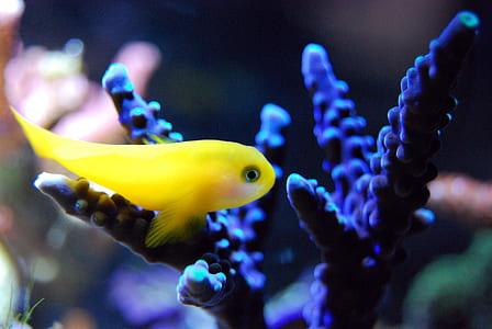 shallow focus photo of yellow fish