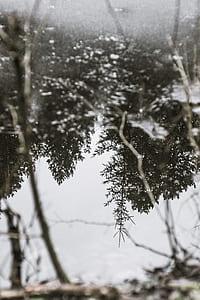 selective focus photo of pine trees
