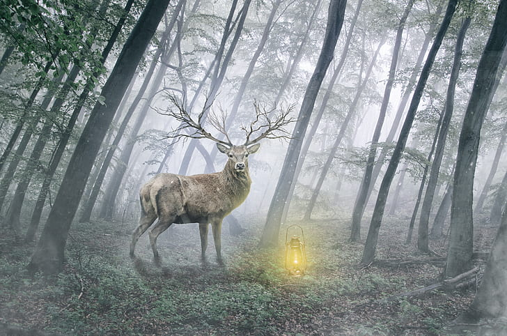 brown deer standing on green forest