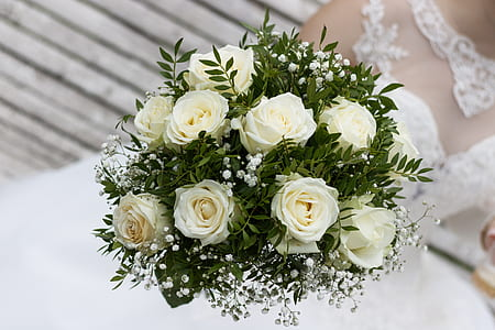 person holding white roses