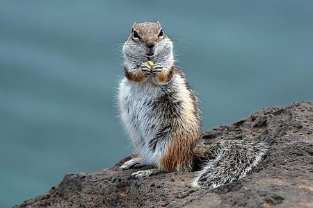 shallow focus photography of gray and brown squirrel