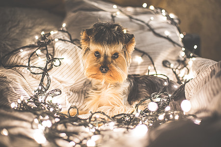 Cute Jessie The Dog in Christmas Lights