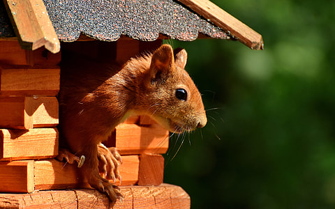 brown squirrel on brown wooden pet house