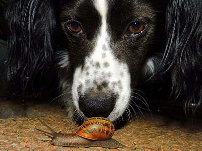photo of long-coated black and white dog beside a snail on ground