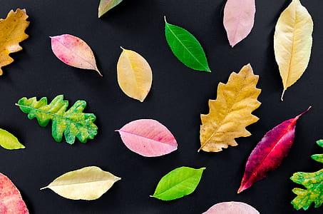 black and multi-colored leaf artworks